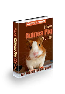 New Guinea Pig Guide Cover